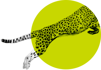Jumping cheetah